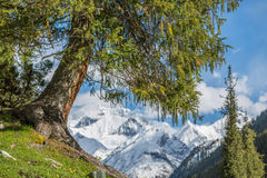 landscape with mountains, Kyrgyzstan Royalty Free Stock Photo