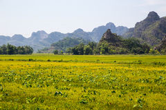 Landscape with mountains, rice fields and river.  Royalty Free Stock Image