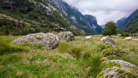 Landscape with mountains and sheep, Norway Royalty Free Stock Photos
