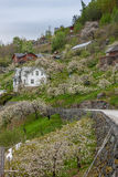 Landscape with mountains.  village in Norwegian Stock Photos
