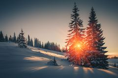Landscape of mountains winter. View of snow-covered conifer trees at sunrise. Retro filter. royalty free stock images