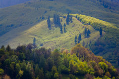 Landscape - mountainside with fir trees. Stock Photos