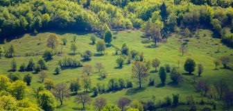 Landscape - mountainside with trees. Stock Photo