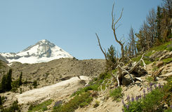 Landscape of Mt. Hood Royalty Free Stock Images
