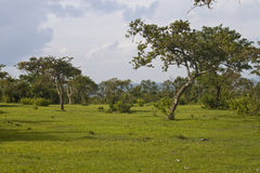 Landscape in Mudumalai National Park Royalty Free Stock Photography