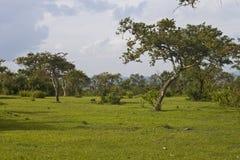 Landscape in Mudumalai National Park Royalty Free Stock Photography