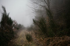 Landscape. Mysterious road. Fog. Foggy path on the mediterranean mountains forest Royalty Free Stock Image