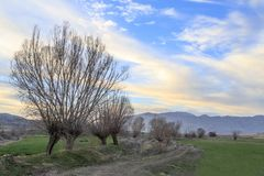 Landscape with naked trees near toros mountains in Antalya. Near sogut city, Turkey Royalty Free Stock Image