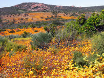 Landscape in namaqualand national park, Republic of South Africa Royalty Free Stock Photos
