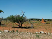 Landscape namibia Stock Photo
