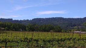 landscape Napa Valley royaltyfri fotografi