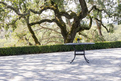 Landscape of Napa Valley, old tree and table with sunflowers Royalty Free Stock Image