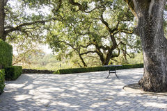 Landscape of Napa Valley, old tree and table with sunflowers Royalty Free Stock Photo