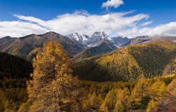 Landscape of national park in China. Stock Photography