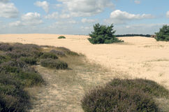 Landscape in National Park Hoge Veluwe. Royalty Free Stock Image