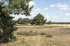Landscape in National Park Hoge Veluwe. Royalty Free Stock Photo