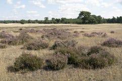 Landscape in National Park Hoge Veluwe. Stock Image