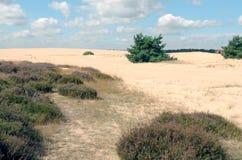 Landscape in National Park Hoge Veluwe. Stock Photography