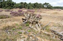 Landscape in National Park Hoge Veluwe. Stock Images