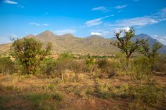 Landscape of the national park in Kenya Royalty Free Stock Photos