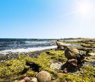 Landscape of the National Park of Ras Mohammed in  Egypt,Red sea Royalty Free Stock Image