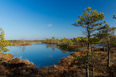 Landscape of national park with swamps in Latvia. Royalty Free Stock Images
