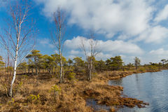 Landscape of national park with swamps in Latvia. Royalty Free Stock Photography