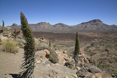 Landscape in national park Teide stock photos