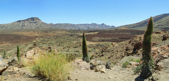 Landscape in national park Teide Royalty Free Stock Photos