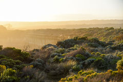 Landscape with native plants near great ocean road Stock Photos