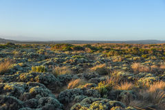 Landscape with native plants near great ocean road Royalty Free Stock Photo