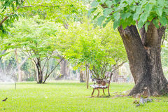 Landscape natural green background of the city park. Stock Photography