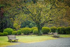 Landscape of nature of autumn trees in shinjuku park Tokyo Japan stock photography
