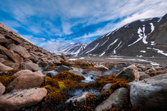 Landscape nature of the mountains of Spitzbergen Longyearbyen Svalbard on a polar day with arctic flowers in the summer. Wallpaper landscape nature of the Stock Photos