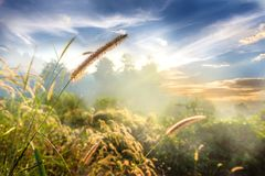 Landscape Nature Of Flower Grass In Soft Fog With Beautiful Blue Sky And Clouds