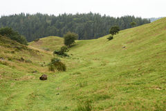Landscape and nature in Rebild Hills in Denmark Stock Photography