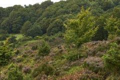 Landscape and nature in Rebild Hills in Denmark Stock Image
