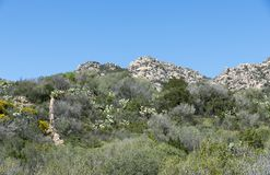 Landscape and nature on sardinia island. Landscape with rocks and flowers and plants like cactus on the italian island sardinia also called sardega Stock Images