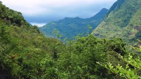 Landscape nature tropical island with rocky mountains overgrown dense green jungle tree, palm and water of sea ocean. Scenic landscape wild nature tropical stock footage
