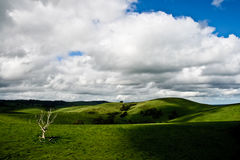 Landscape near adelaide. Green landscape near Adelaide on a cloudy sky Stock Images