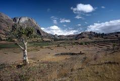 Landscape near Ambalavao,Madagascar. Fields and rice Paddies  near Ambalavao ,Madagascar Royalty Free Stock Image