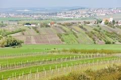 Landscape near Boretice, Czech Repub Royalty Free Stock Photo