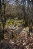 Landscape near Captain Arcoudas stone bridge, Zagorohoria, Greec Stock Images