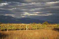 Landscape near Ikalto (Iqalto). Kakheti. Georgia Stock Photography