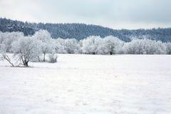 Landscape Near Pasterka Village In Poland Stock Images