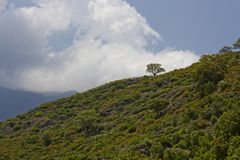 Landscape near Ponte Novu, Central Corsica, France Stock Photography