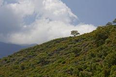 Landscape near Ponte Novu, Central Corsica, France Stock Photography