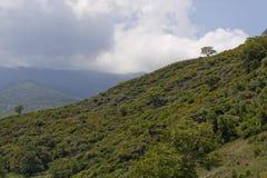 Landscape near Ponte Novu, Central Corsica, France, Europe Royalty Free Stock Photography