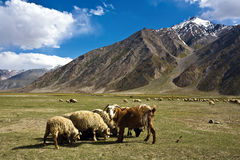 A landscape near Rangdum monastery, Zanskar Valley, Ladakh, Jammu and Kashmir, India. Stock Image