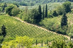 Landscape near San Gimignano Tuscany Royalty Free Stock Photos